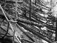 100 лет назад (1908) на Землю упал Тунгусский метеорит